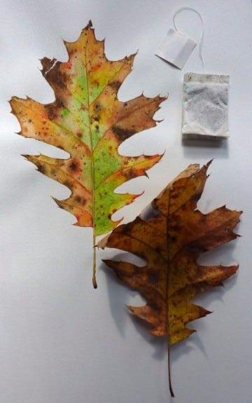 hojas de otoño para colorear modelos