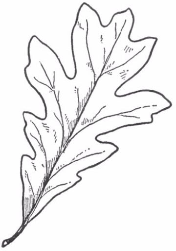 hojas de otoño para colorear y decorar