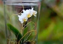 Arreglos y centros de mesa con orquideas naturales