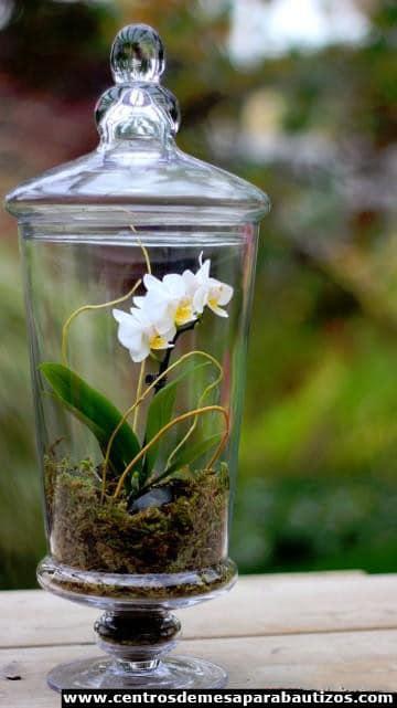 centros de mesa con orquideas en cristal