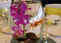 Imagenes con ideas de centros de mesa con peces