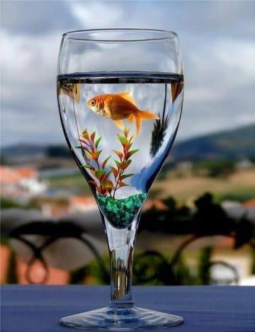 centros de mesa con peces para fiestas infantiles