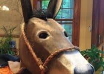 Ideas de como hacer un burro de carton para decoracion