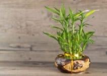 Basicos y sencillos centros de mesa con bambu
