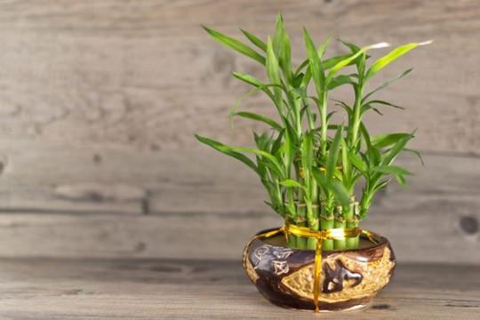 centros de mesa con bambu faciles