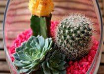 Elegantes y permanentes centros de mesa con cactus