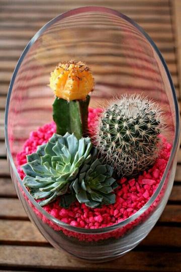 centros de mesa con cactus sencillos