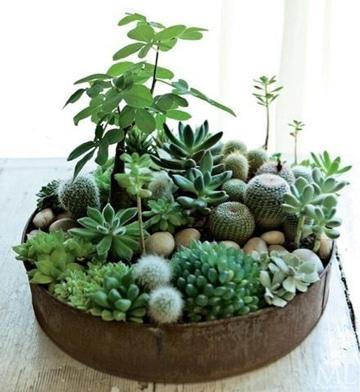 centros de mesa verdes con cactus