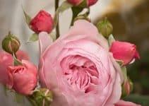 Diversas imagenes de flores de colores para adornos