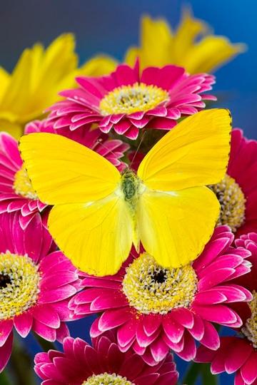 imagenes de flores de colores super nitidas