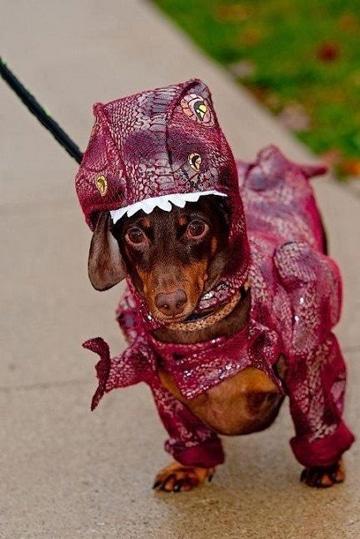 disfraces para perros de halloween divertidos