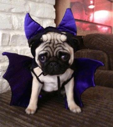 disfraces para perros de halloween graciosos