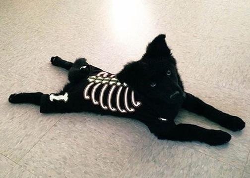 disfraces para perros de halloween simples