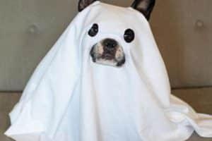 Curiosos y originales disfraces para perros de halloween