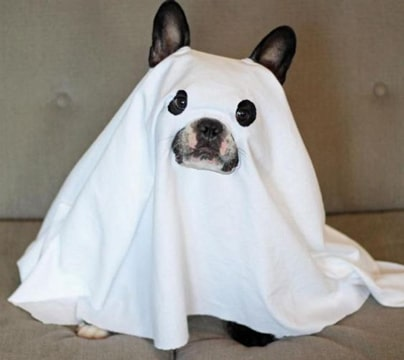 disfraces para perros de halloween super comicos