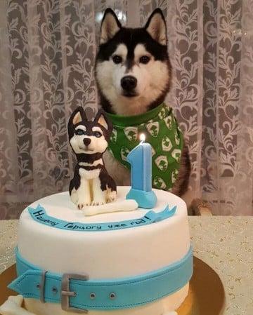imagenes de cumpleaños con perros husky