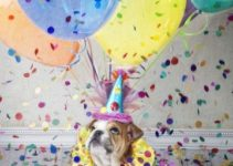 Bonitos recuerdos en imagenes de cumpleaños con perros