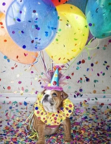 imagenes de cumpleaños con perros pugs