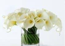 Originales arreglos florales en cilindros de vidrio