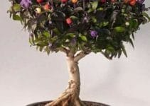 Ideas y consejos de como hacer arboles frutales enanos