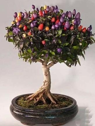 como hacer arboles frutales enanos tipo bonsai