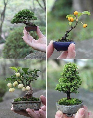 como hacer un bonsai en casa de un arbol