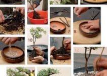 Consejos para saber como hacer un bonsai en casa