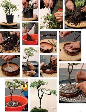 como hacer un bonsai en casa paso a paso