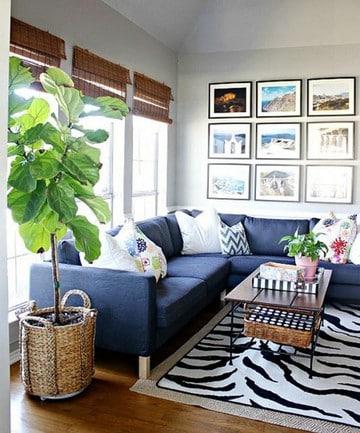 imagenes de plantas de sombra para decorar el hogar