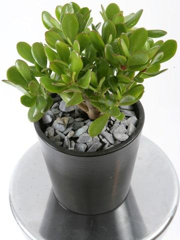 imagenes de plantas de sombra pequeñas