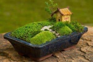 Curiosos jardines japoneses en miniatura para decorar