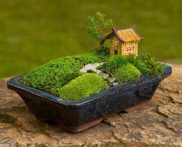 jardines japoneses en miniatura faciles de hacer