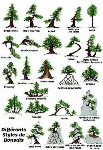 tipos de bonsai y sus nombres de pino