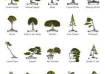 Diferentes y bonitos tipos de bonsai y sus nombres