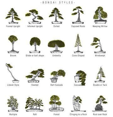 tipos de bonsai y sus nombres segun su estilo