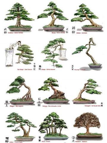 tipos de bonsai y sus nombres
