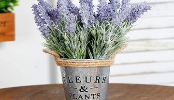 flores de sombra para interiores con fragancia