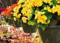 Recomendaciones de flores de sombra para interiores