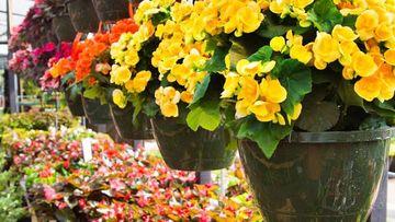 flores de sombra para interiores de hermosos colores