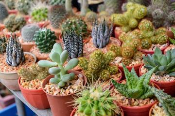 plantas de sombra para exteriores pequeñas