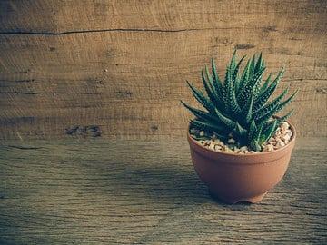 plantas pequeñas para interiores cactus