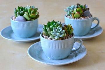 plantas pequeñas para interiores las suculentas