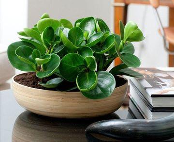 plantas pequeñas para interiores que purifican el aire
