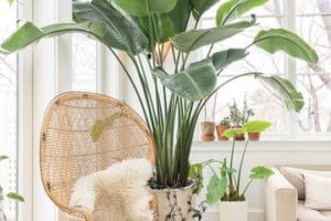 Las mejores opciones de plantas artificiales para sala