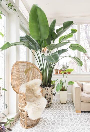plantas artificiales para sala grandes