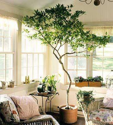 plantas artificiales para sala hasta el techo
