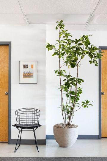plantas artificiales para sala minimalista