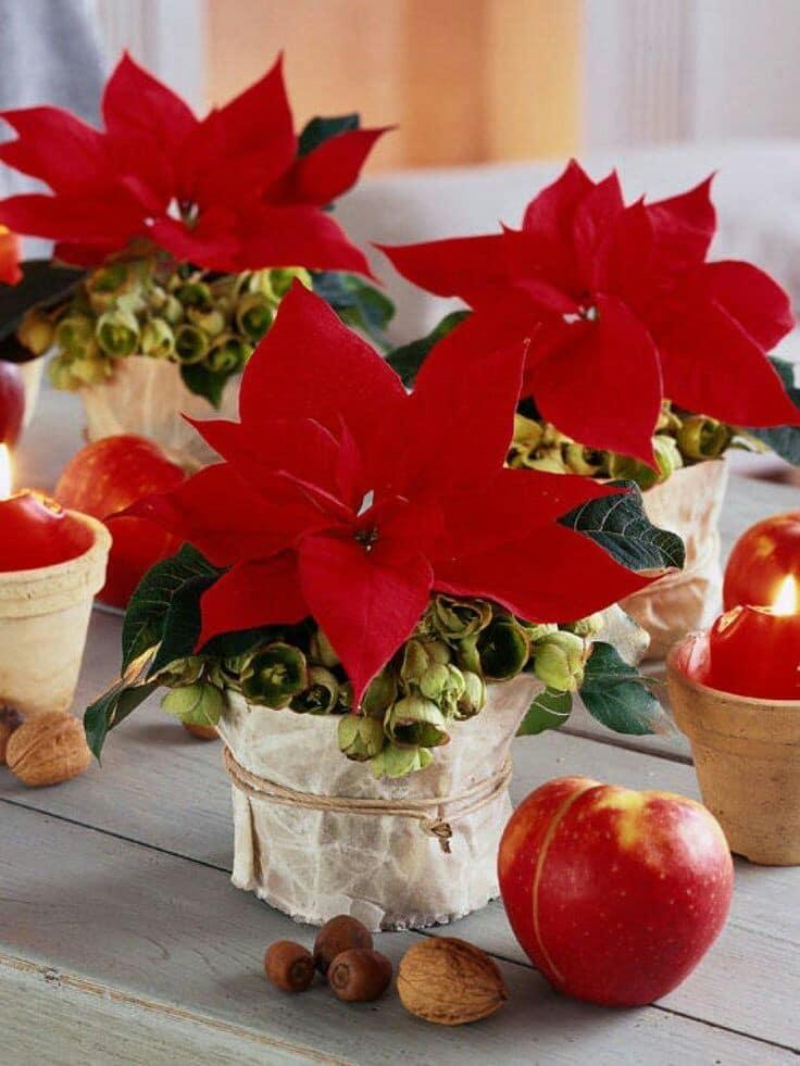 plantas para centros de mesa navideño